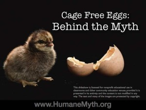 Behind the Myth - cage free eggs