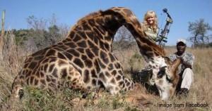 trophy - dead giraffe